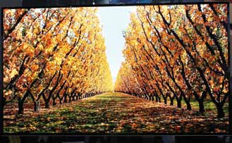 OLED TV by Samsung
