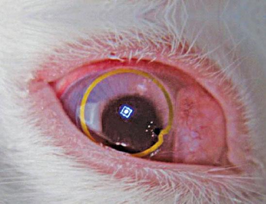 Fig. 1: Prototype of the lens on a rabbit's eye(Courtesy: University of Washington)