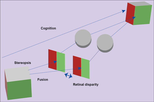 Fig. 1: Basic process showing how real-world objects are perceived. Stereopsis is the cognitive sensation and retinal disparity is the inter-ocular distance (Courtesy: www.affonsobeato.com)