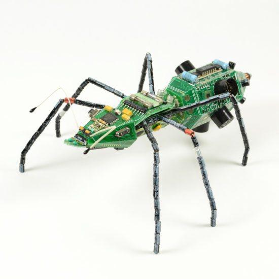 AAB_beetle