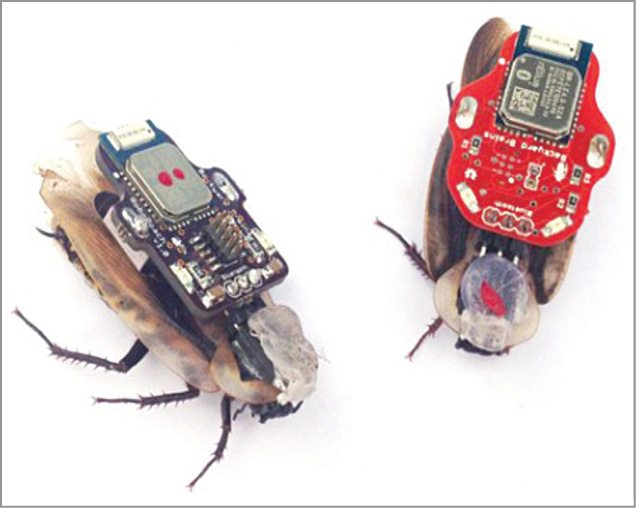 Fig. 3: RoboRoaches, the animal cyborgs (Image courtesy: www.extremetech.com)