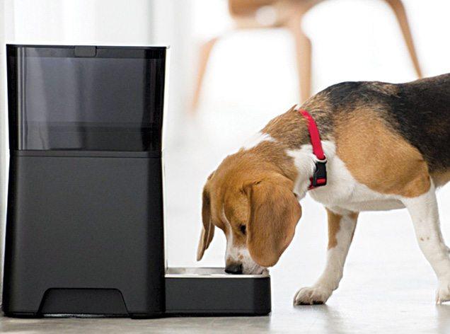 Fig. 4: Petnet smartfeeder being used to feed a Beagle