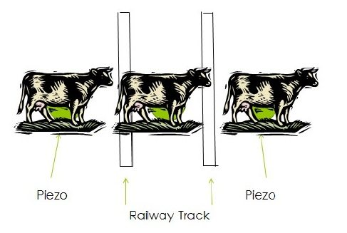 animals passing through tracks