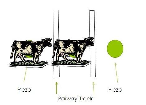 animals on pressure sensors