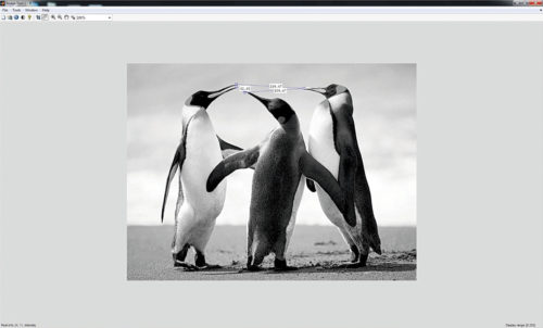 Fig. 6: The Measure Distance tool under Tools tab is used to measure distances between the beaks of different penguins