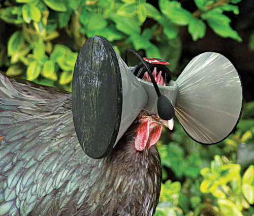 Virtual reality system for chickens | Agriculture 4.0