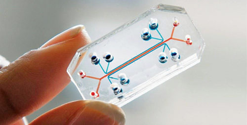 Organs on a chip
