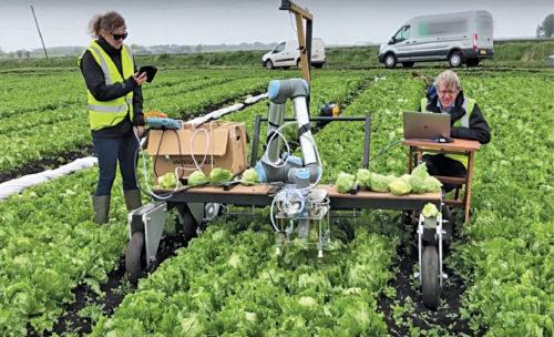 Vegebot, an autonomous iceberg-lettuce-harvesting robot