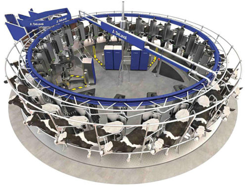 Prototype of a robotic rotary automatic milking system