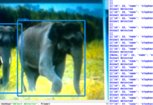 Python-Based Species Classification Wireless Camera For Forest Survey And Monitoring results
