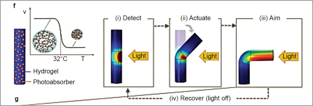 Mechanism of phototracking of SunBOT