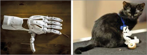 3D-printed prosthetics help humans and animals