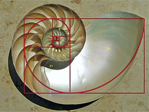 Logarithmic geometry of a nautilus shell