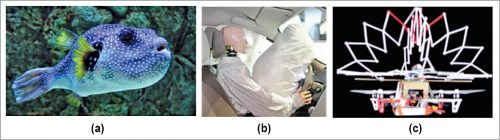 (a) Pufferfish (Courtesy: starkrusher, flickr), (b) vehicle airbag (Courtesy: Vereshchagin Dmitry, Shutterstock), (c) Pufferbot