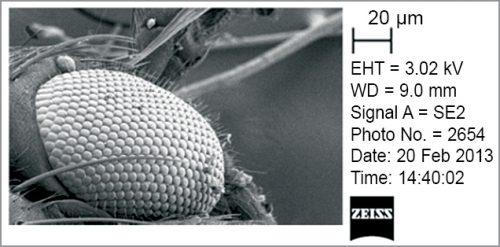 Mosquito eye (Courtesy: WCFTO Nano SEM pictures)